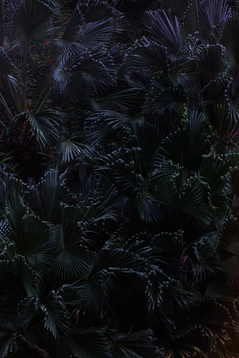 03_Hong Kong_Palm TreesWeb.jpg