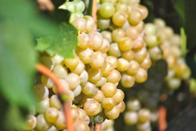 Harvest-Blog-e1504209071247.jpg