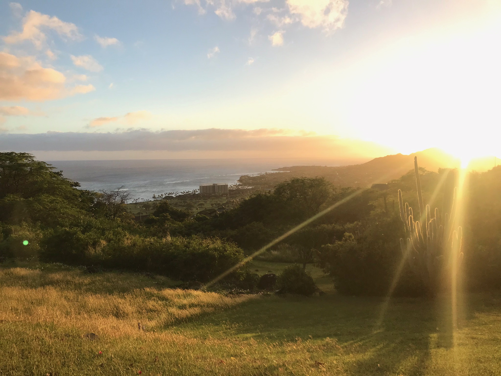 Carbon Offsets - We left our beautiful 'aina for a week … how to offset our carbon footprint?!