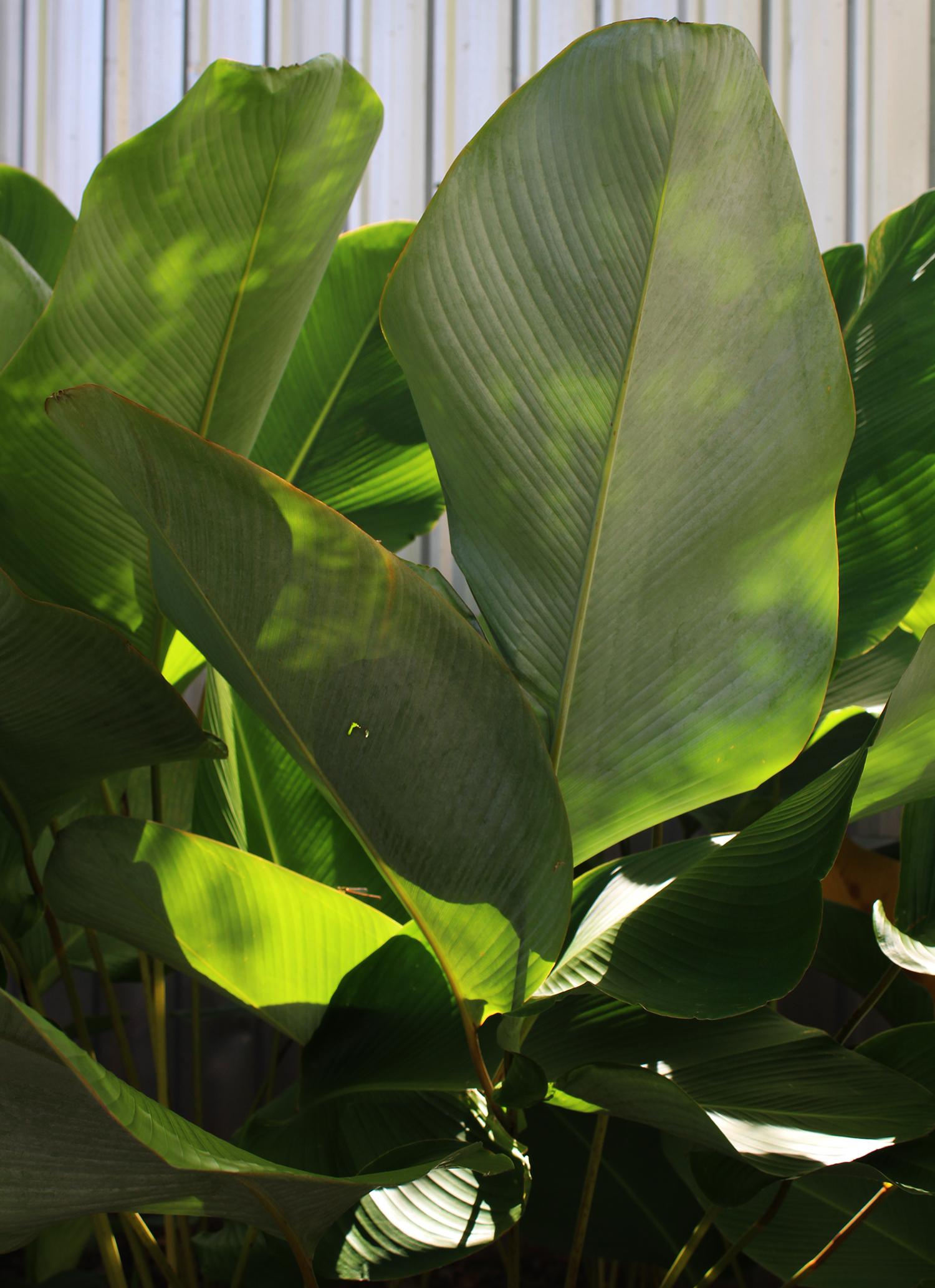 wearemad palm tree phuket.jpg