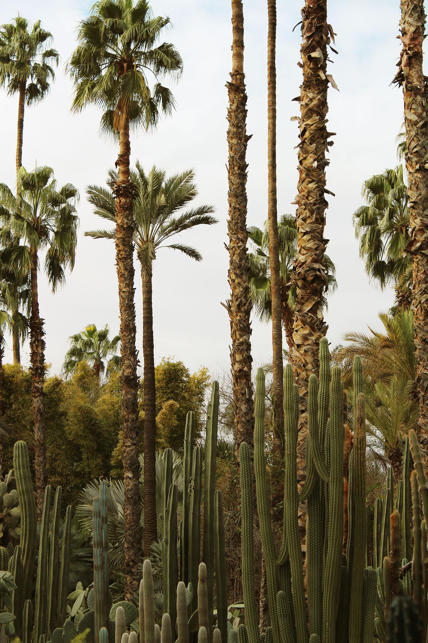 marrakech 32.jpg