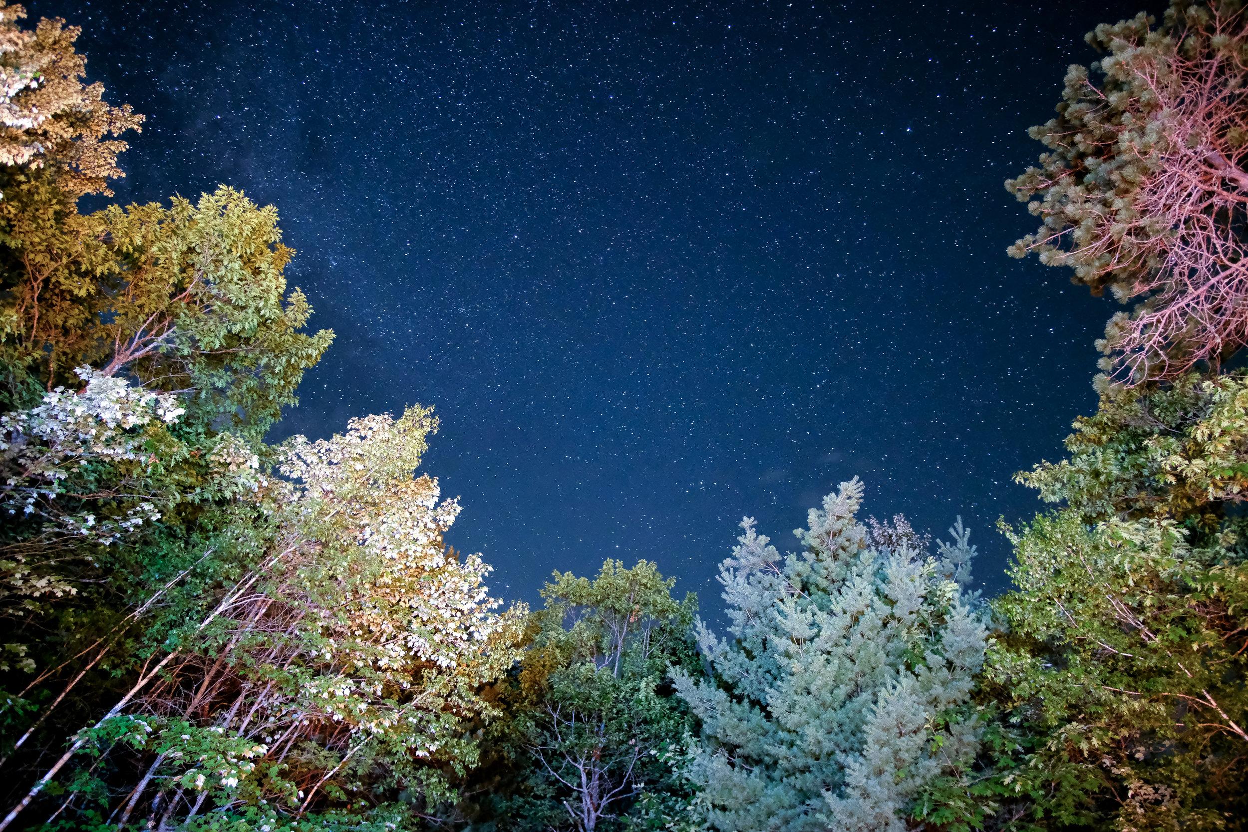 Sagittarius - November 22 - December 21