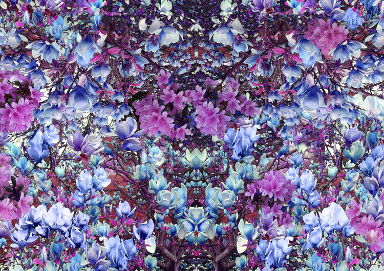 BLOSSOM KALEIDOSCOPE  This print is made up of many photographs that Isabel took from Kew Gardens in London. She combined her many photographs together to create this complex digital print.