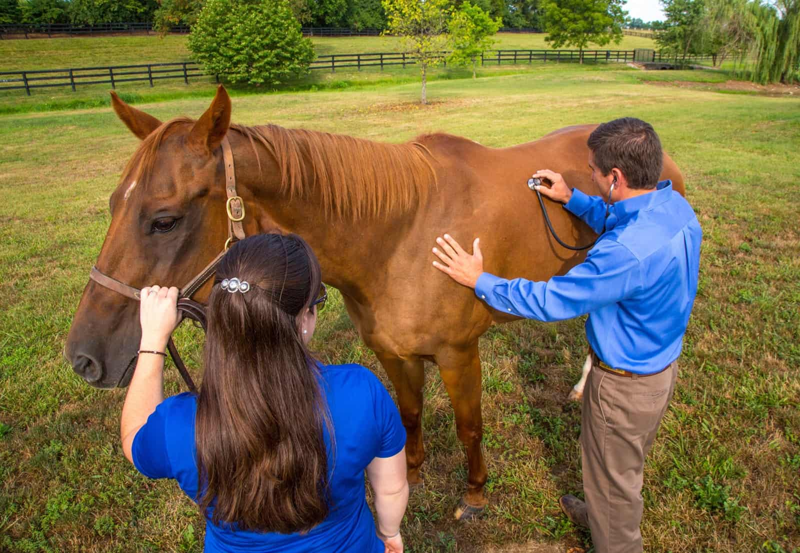 Operation G.E.L.D. works with veterinarians to make gelding accessible and affordable for Maryland horse owners facing financial hardships. - Together we can reduce the number of horses at risk.