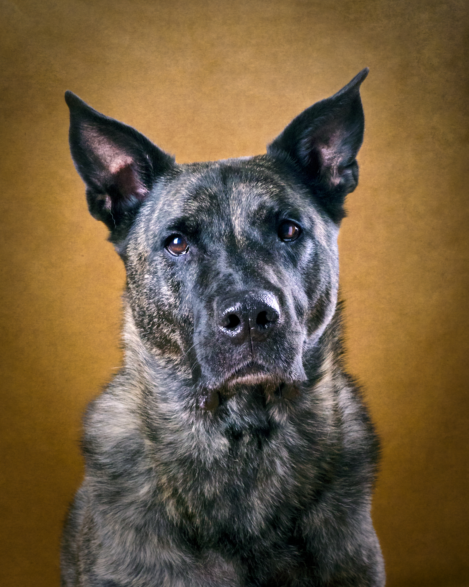 hundporträtt studio hundfotograf skåne ögonhöjd