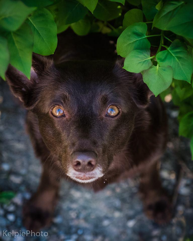 hund porträtt fågelperspektiv hundfotograf skåne höör