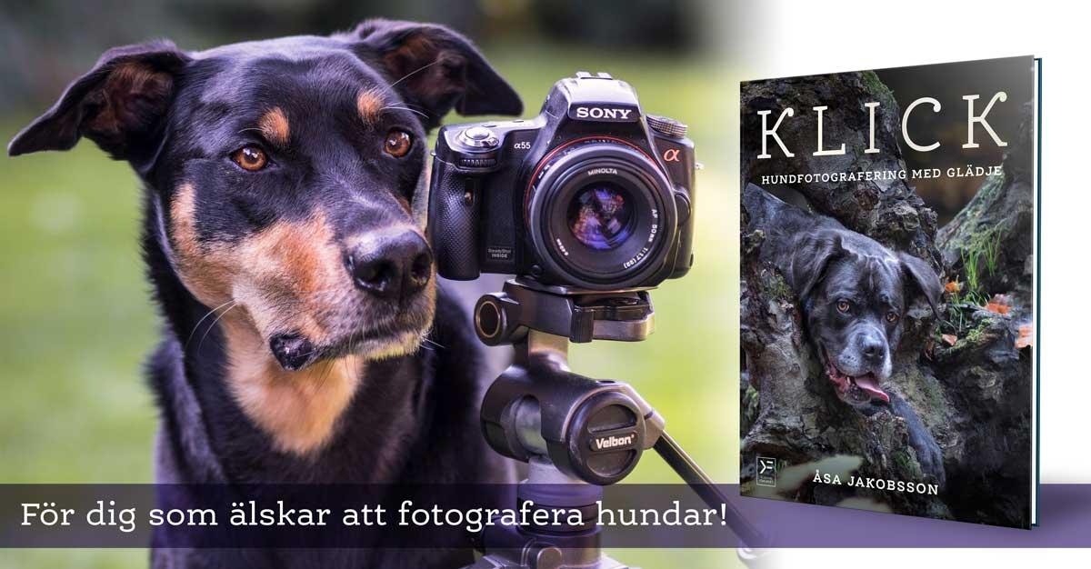 Klick hundfotografering med glädje