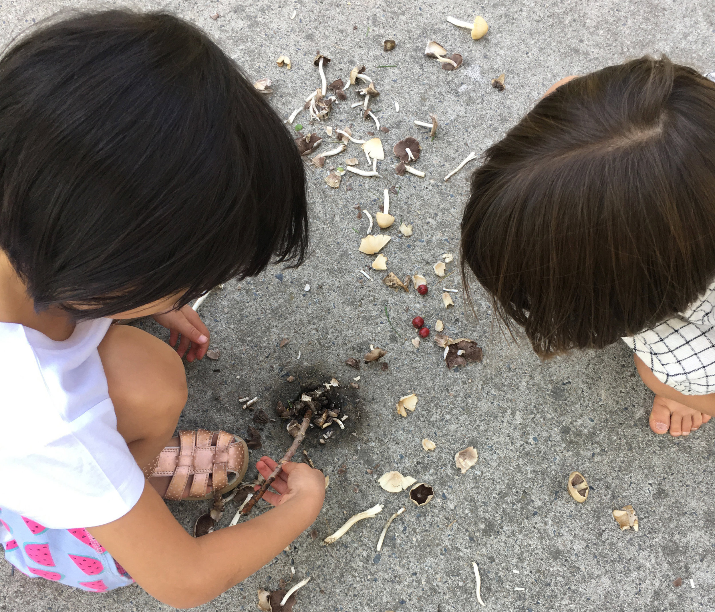 roots - ages 3-6