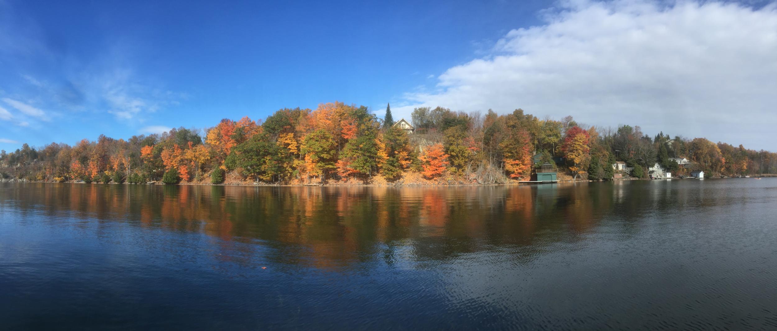 Fall near Wildflower Lane