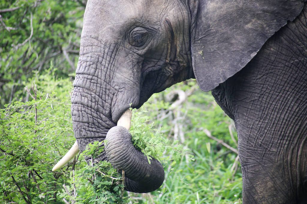 Should you go on a Self Drive Safari or a Guided Game Drive in South Africa? | South African Safari Tips and Advice #SouthAfrica #KrugerNationalPark #Addo #AddoElephantPark #AddoNationalElephantPark
