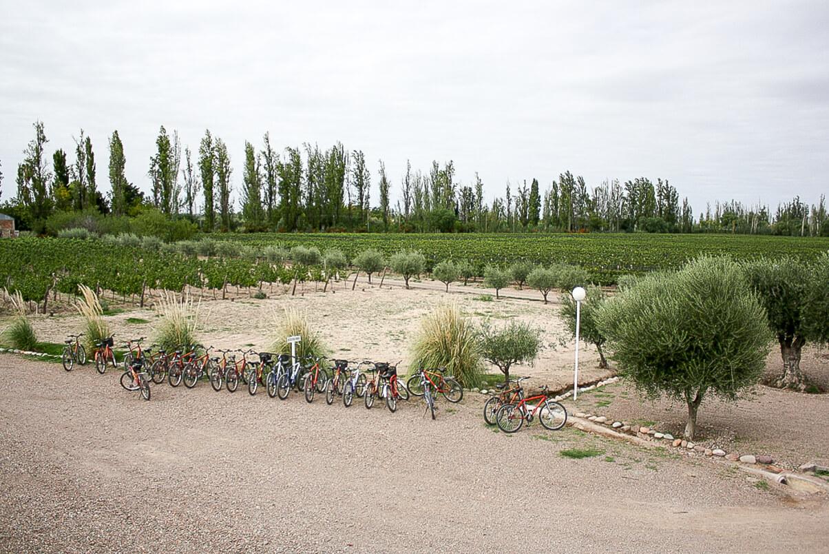 Bike rentals in Mendoza in Maipu