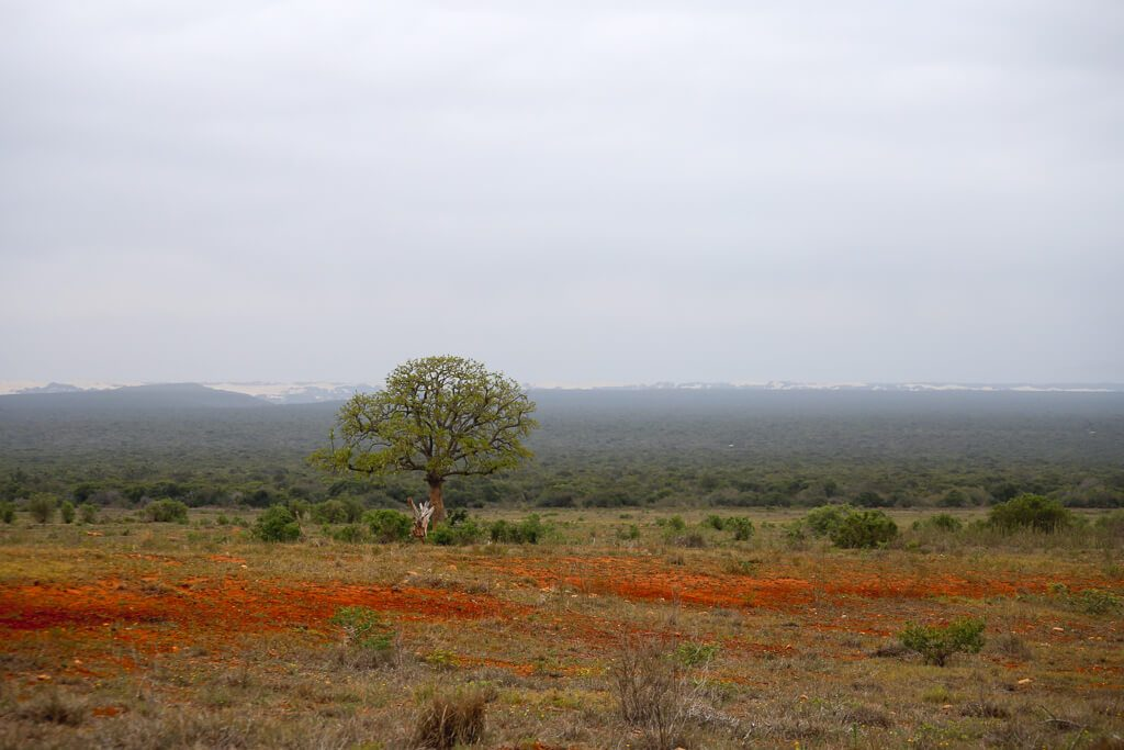 Sand dunes in the distance in Addo Elephant Park
