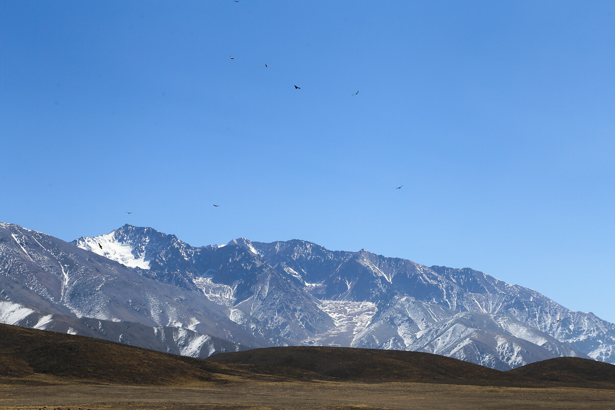 Condors flying near Mendoza
