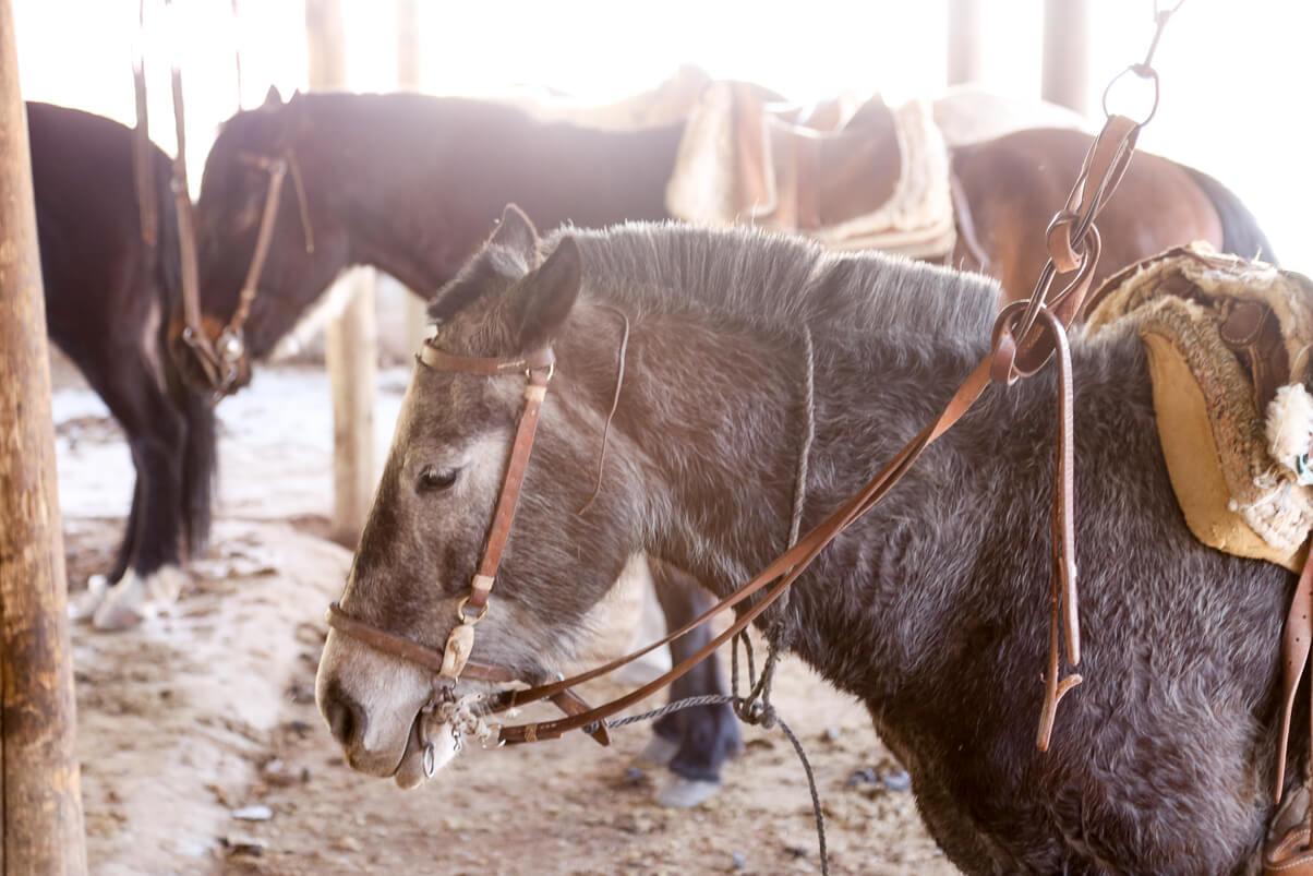 Horseback riding with Rincon de los Oscuros in Potrerillos