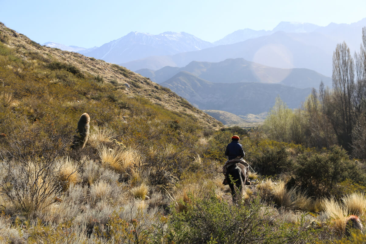 Guided horseback riding tour on a Mendoza day trip