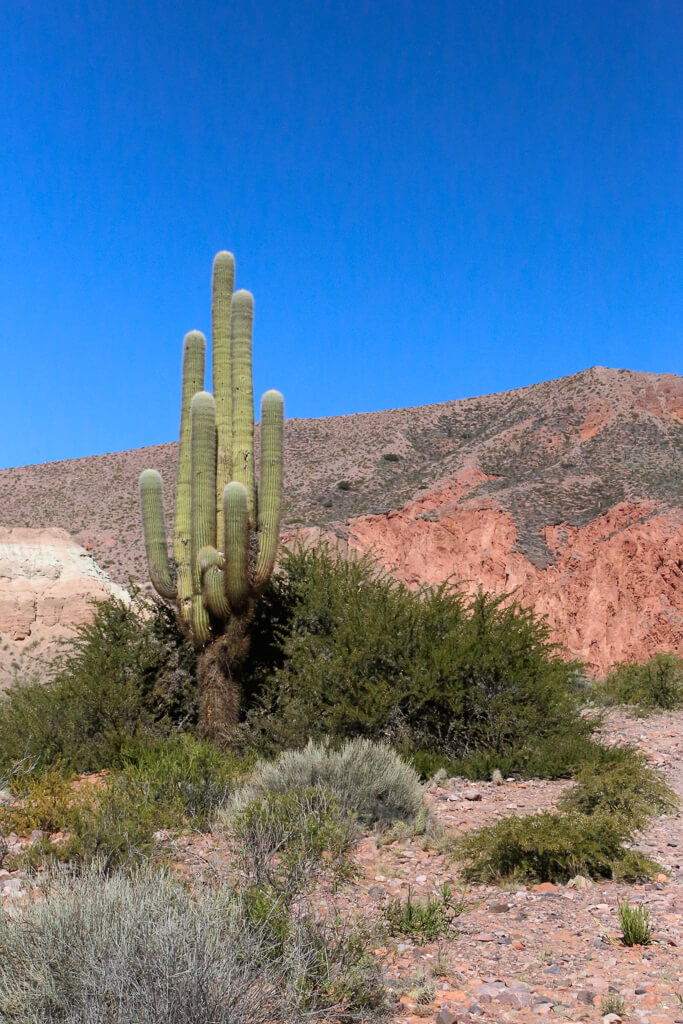 Complete Itinerary for Jujuy in Northwest Argentina (38).jpg