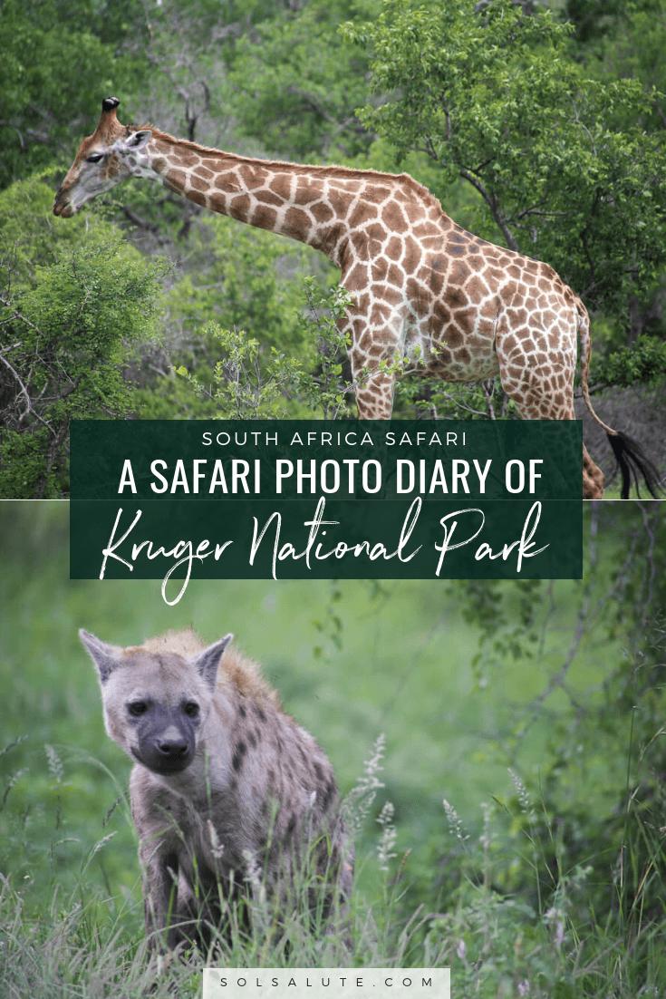 30 Photos of a Safari in Kruger National Park in South Africa, Safari Photography in Kruger #Kruger #Safari #SouthAfrica #Africa #SelfDriveSafari #Big5Safari via @solsalute