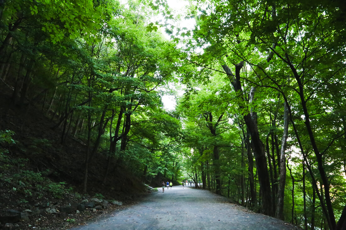 Free things to do in Montreal include mount royal park