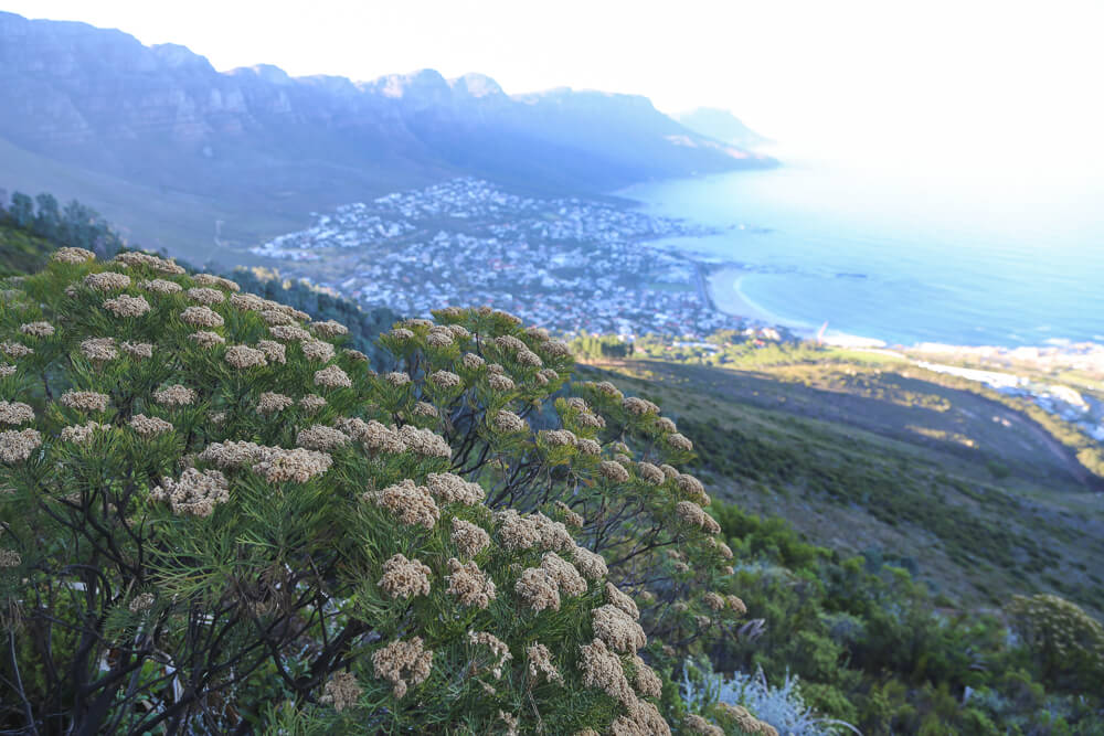 5 days in Cape Town