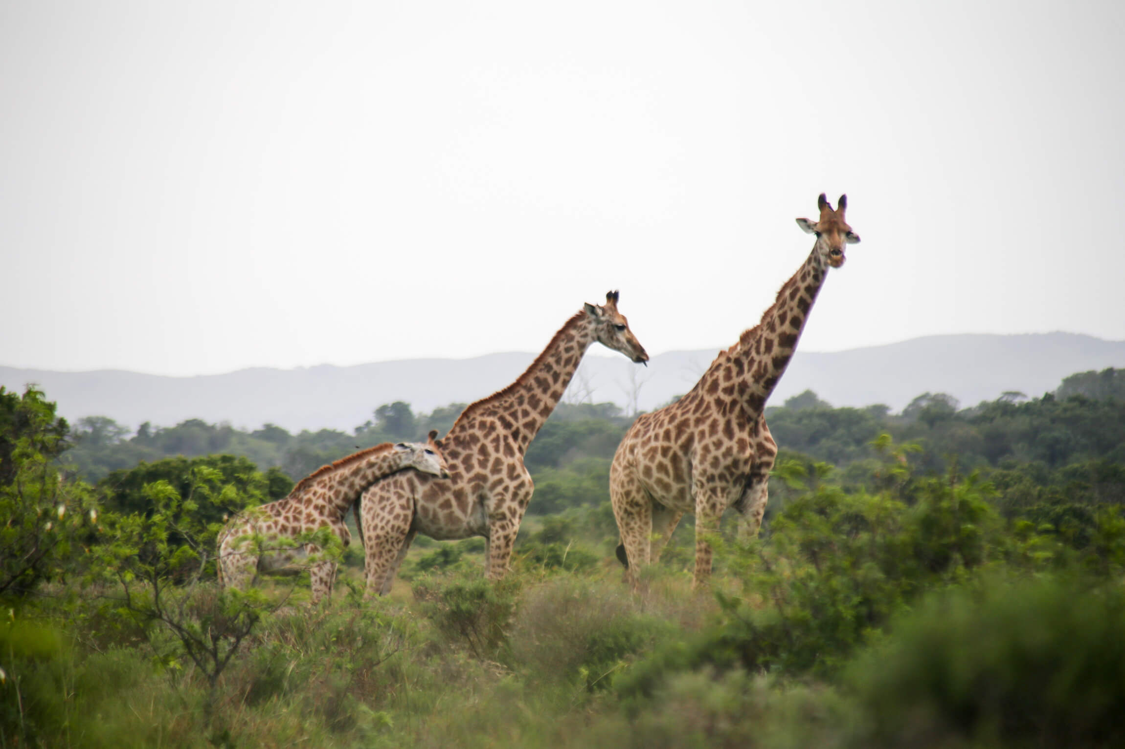 Top Adventurous things to do in St Lucia South Africa