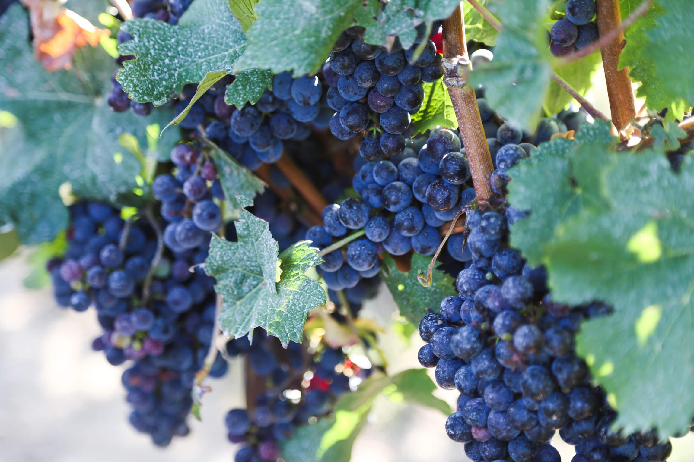 Best wineries in Mendoza