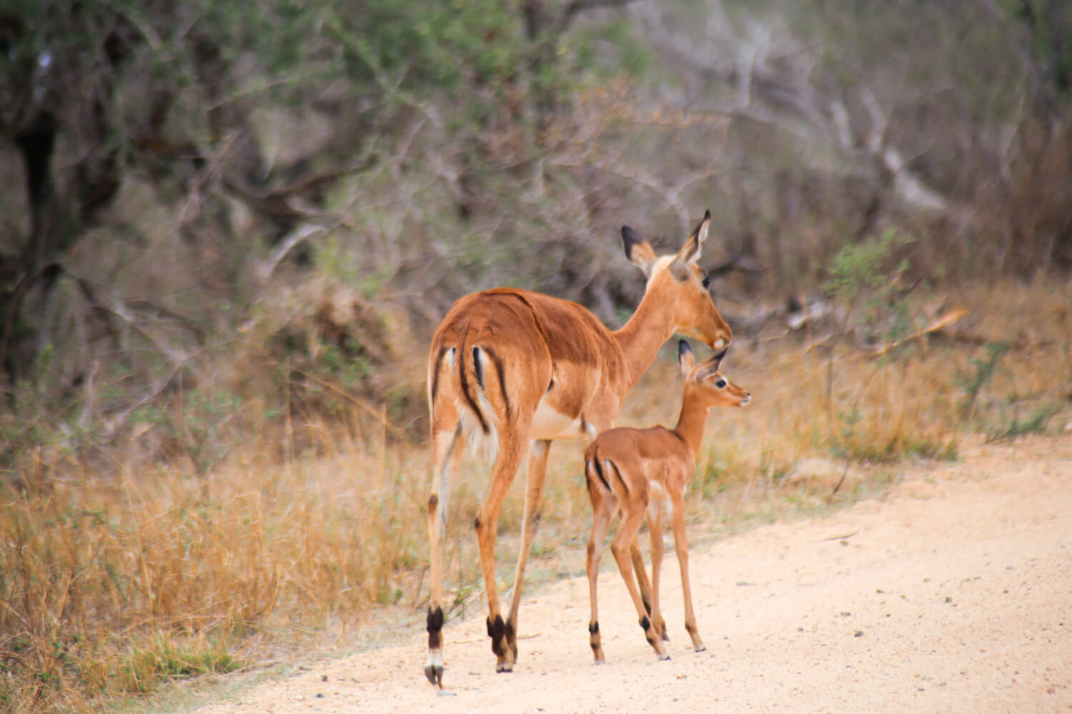 November in Kruger National Park allowed us to see so many babies!
