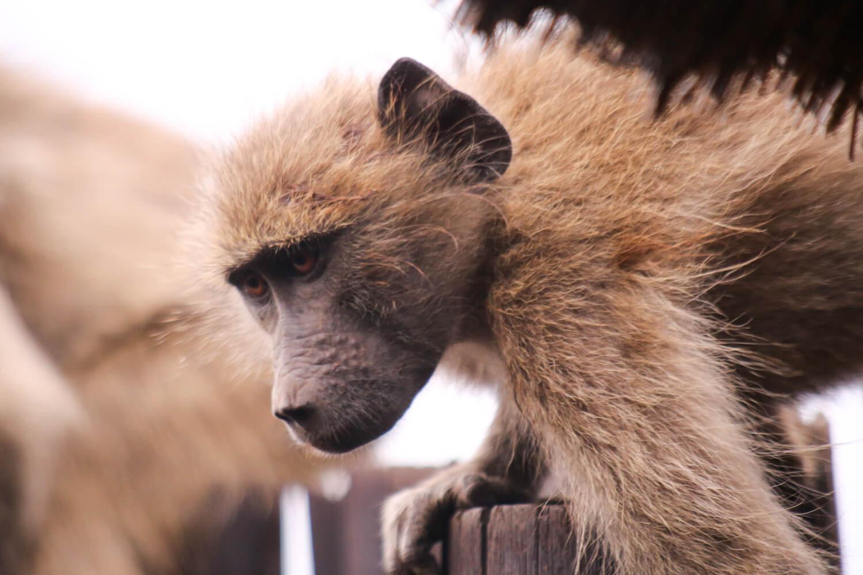 Kruger National Park-23.jpg