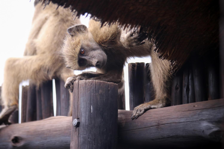 Kruger National Park-24.jpg