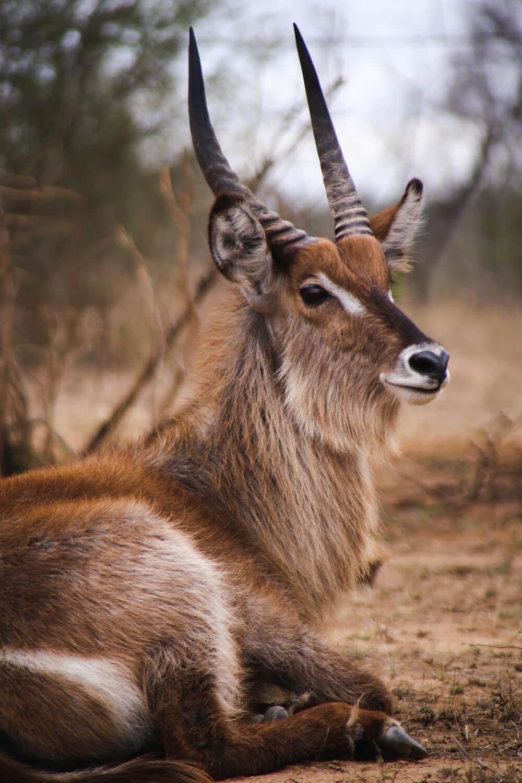 Stunning pictures of Kruger National Park in November, #KrugerNationalPark #SouthAfrica #Africa
