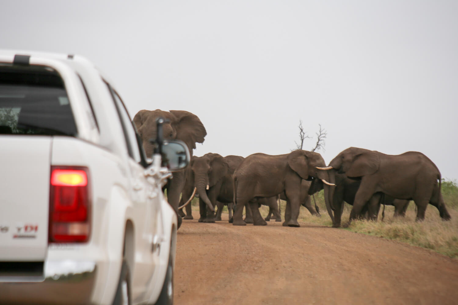 Elephants in the road in photos of Kruger National park