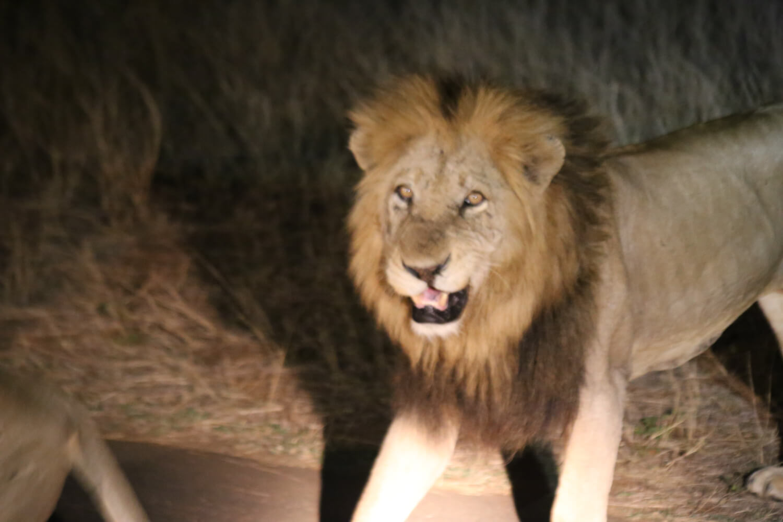 Kruger National Park-449.jpg