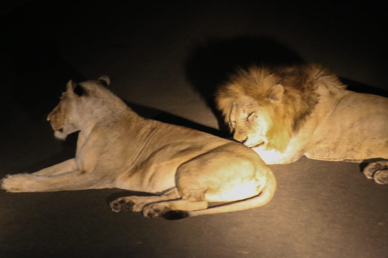 Kruger National Park-452.jpg
