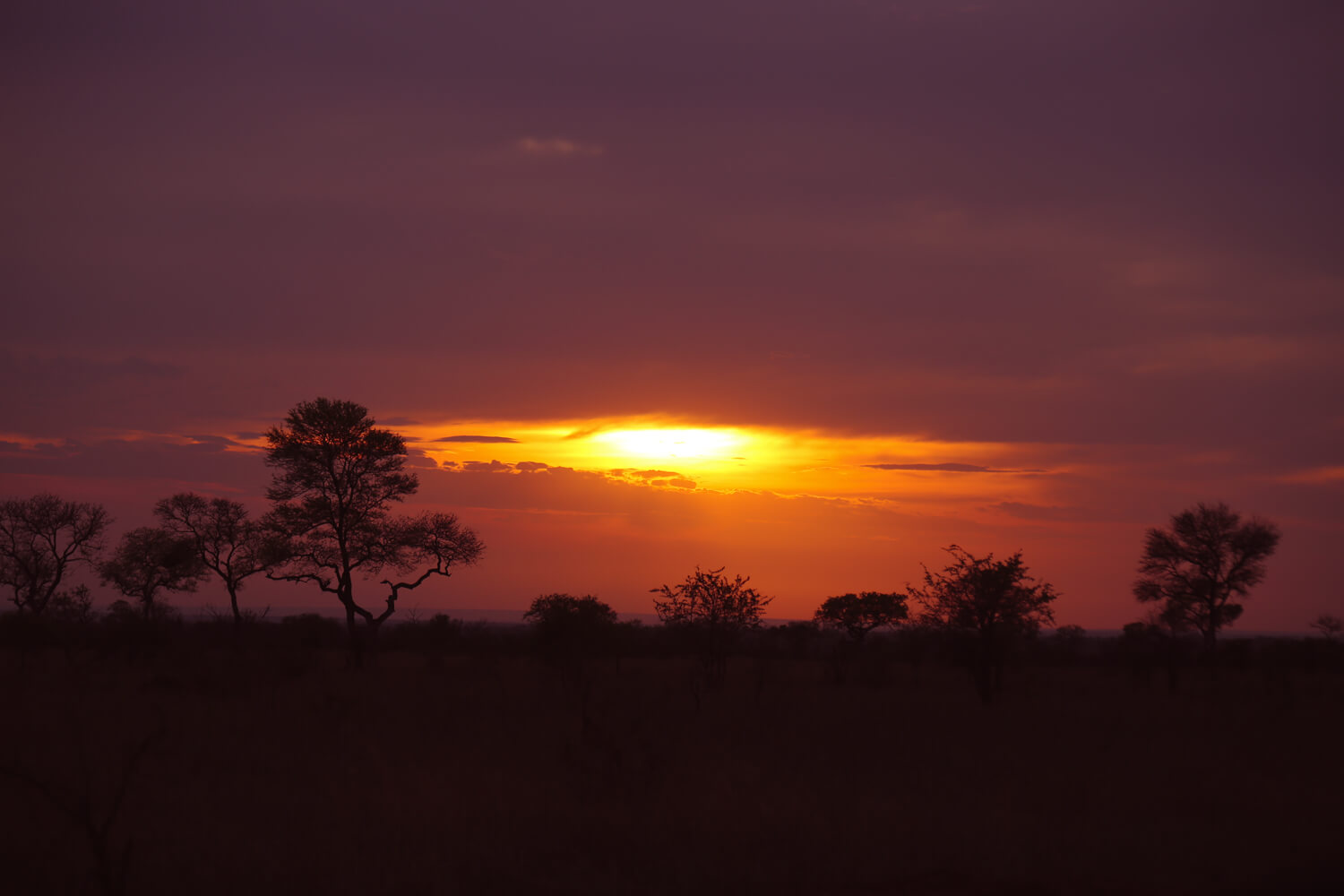 Yet another beautiful Kruger sunrise.