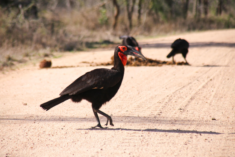 Images of Kruger Park Birdwatching