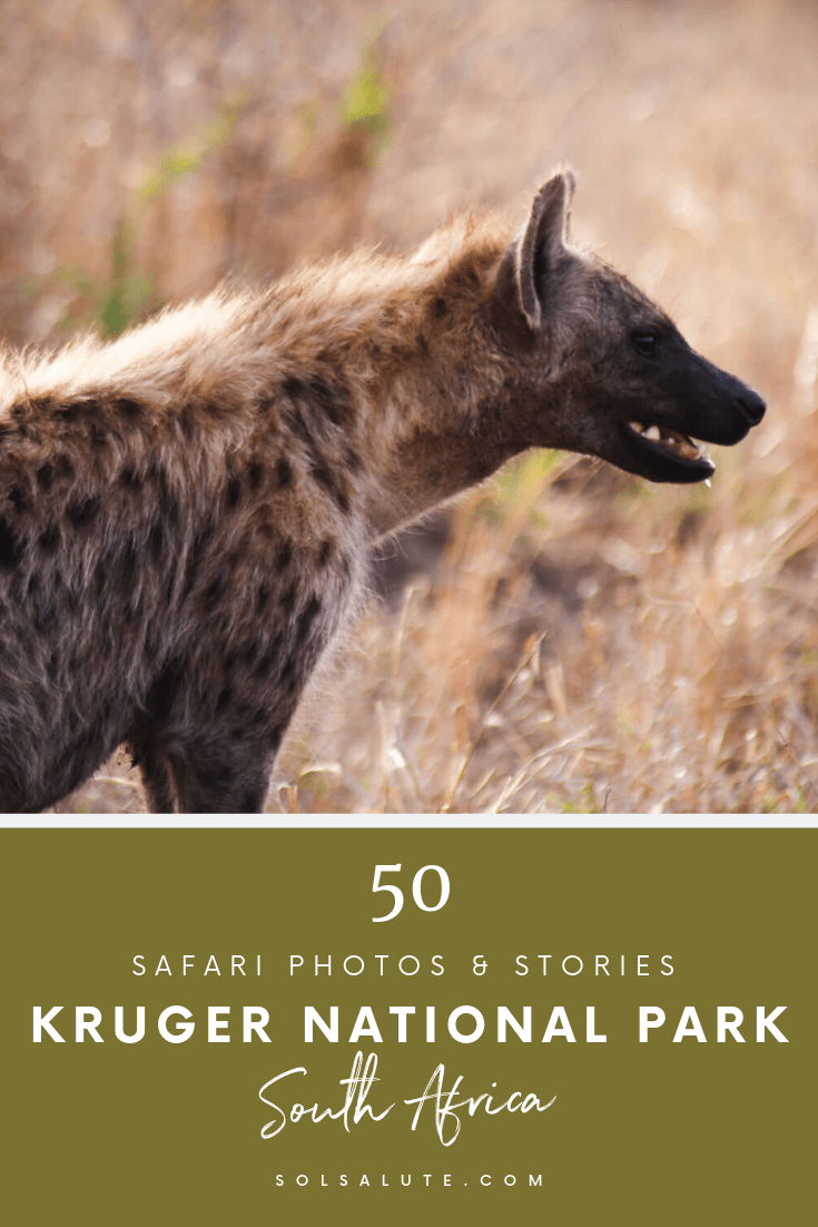50 Pictures of Kruger National Park in November, Safari photos and stories from our 5 days in Kruger. #Kruger #KrugerNationalPark #SouthAfrica #Safari
