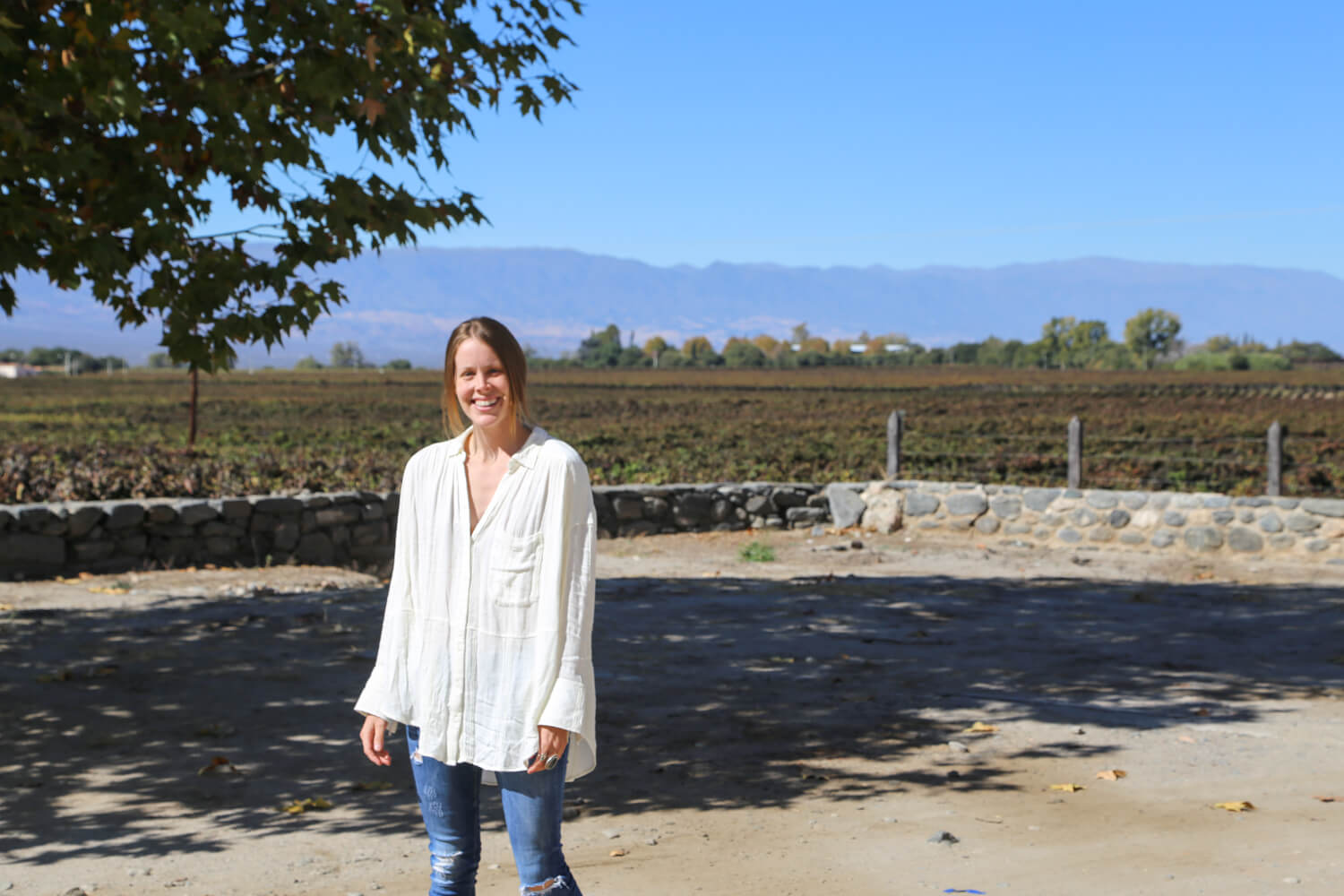 the best wineries in cafayate