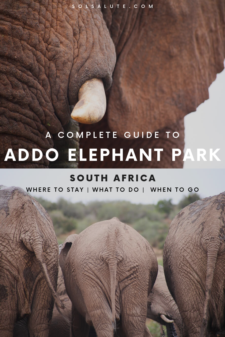 A complete guide to an Addo Elephant Park safari, when to visit Addo Elephant National Park as well as Addo entrance fees and Addo Elephant Park accommodation. #AddoElephantPark #SouthAfrica