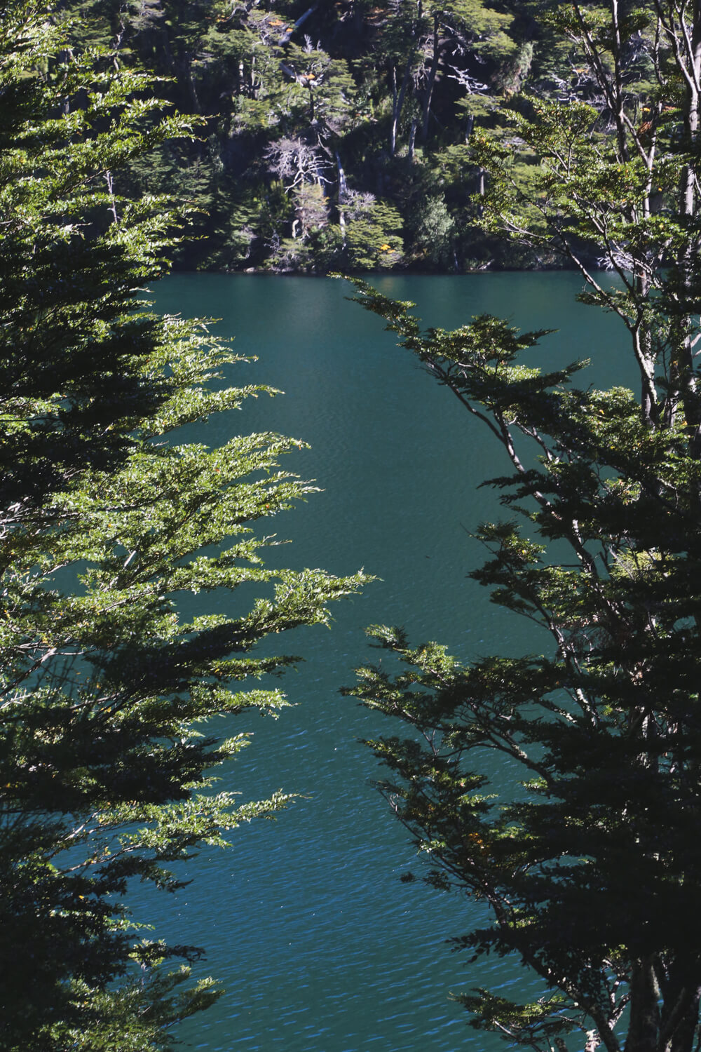 A teal green lake is hidden behind trees on the 7 Lakes Route Argentina