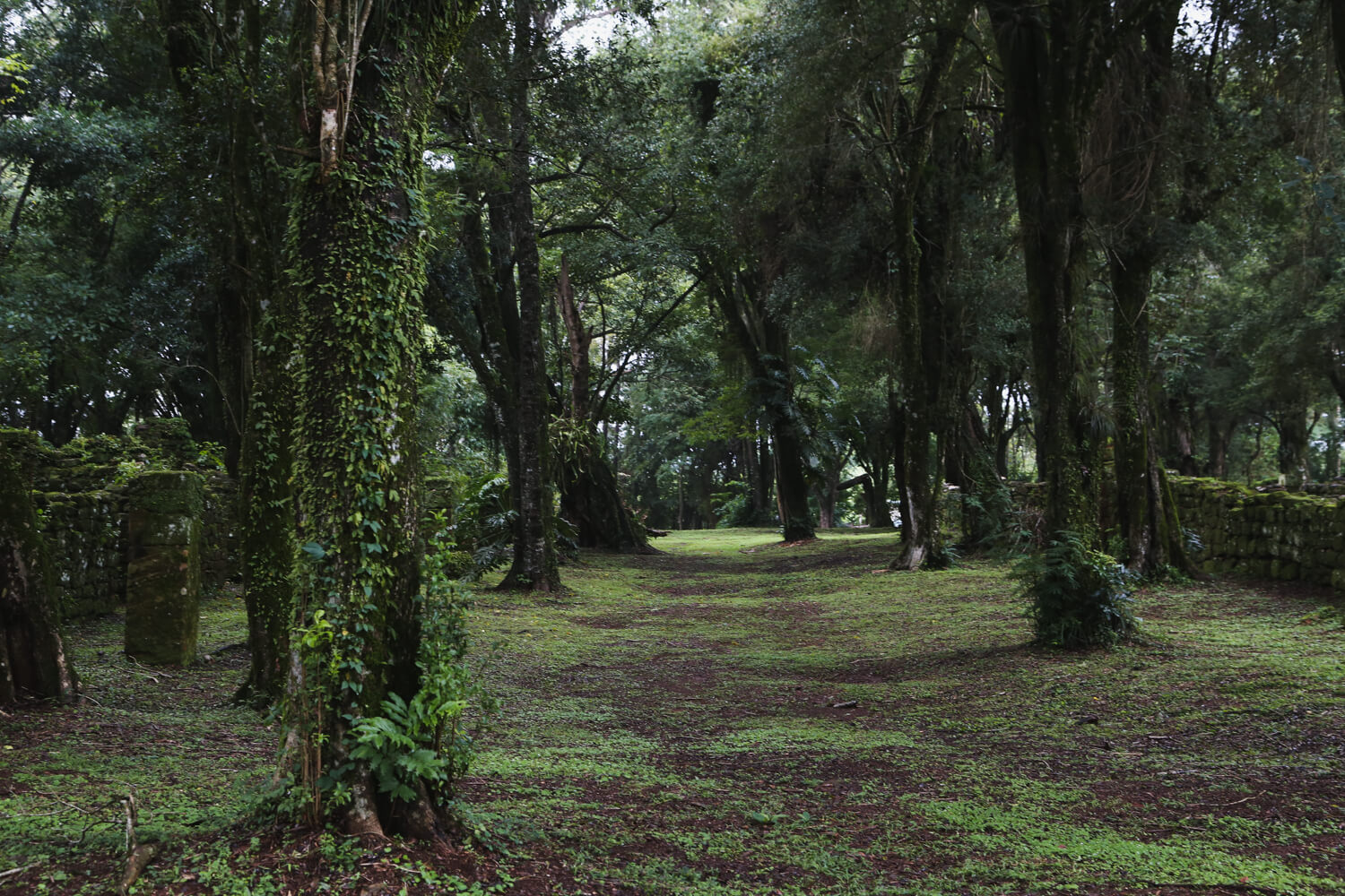 A path winds through the lush green jungle in Northeast Argentina