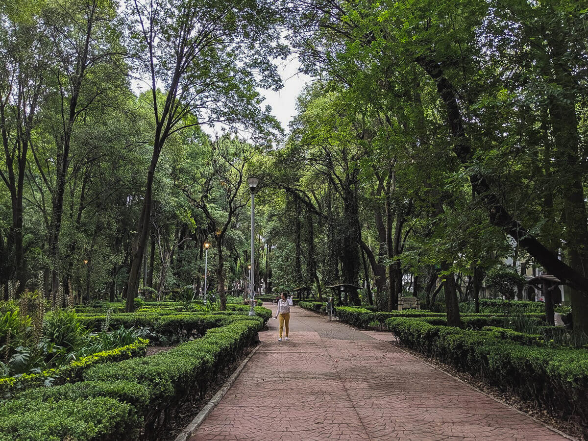 A sidewalk weaves through a tree filled park in Mexico City