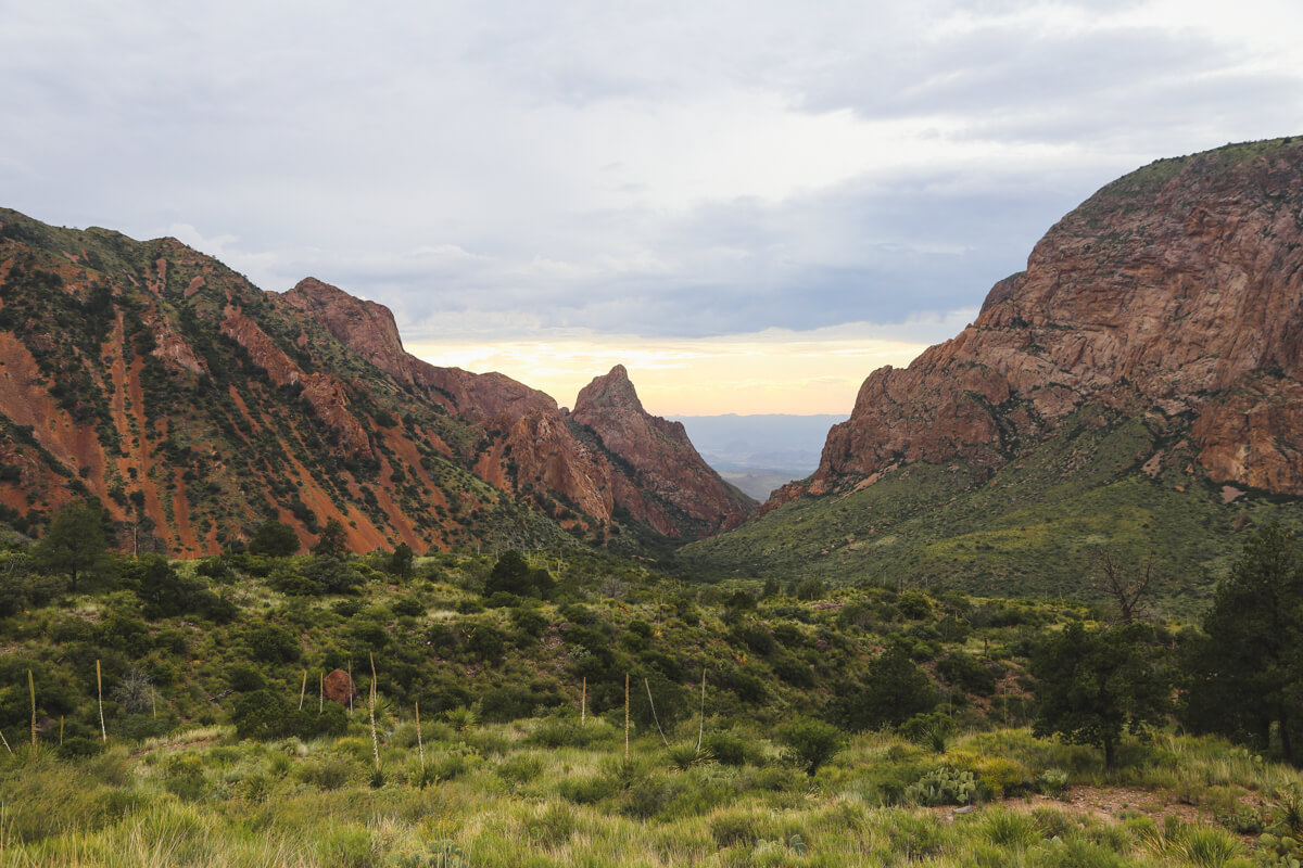 A view of the green valley known as the window trail in big bend national park