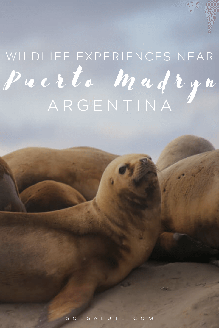 Best Puerto Madryn wildlife experiences in Argentina Patagonia | What to do in Puerto Madryn Argentina | Peninsula Valdes Argentina | Argentina wildlife Puerto Madryn Patagonia | The perfect Puerto Madryn Itinerary for Peninsula Valdes | Things to do in Puerto Piramides Argentina | Whale watching in Argentina | Where to see penguins in Argentina | Where to stay in Puerto Madryn | Argentina Patagonia itinerary #Argentina #patagoniaa