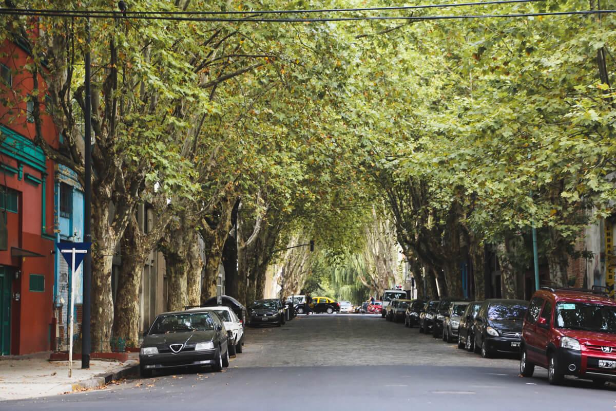 A tunnel of trees hangs over a cobblestone street in Buenos Aires neighborhood, Villa Crespo