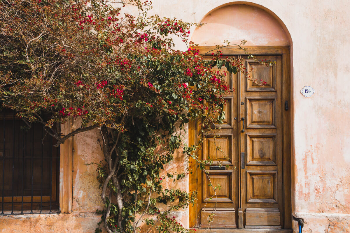 An ivy with red flowers grows up a pink stucco building and wooden door in Colonia Uruguay