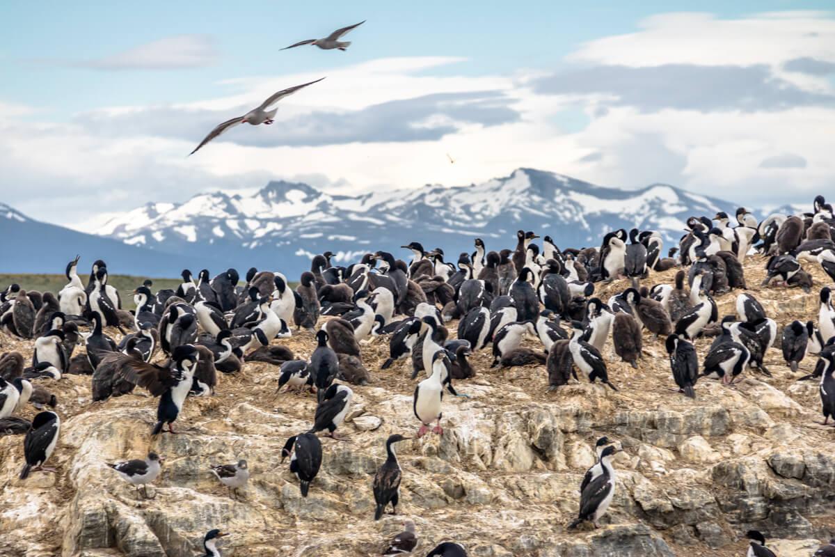 Penguins in Ushuaia | Source:  Diego Grandi © 123RF.com