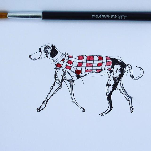 Dog in a sweater vest #sketch #observation