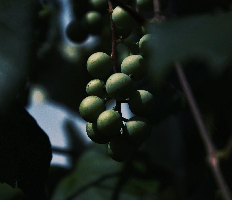 hievoo - hemp infused extra virgin olive oil 3 olive oil