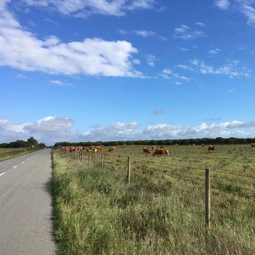Rural Alentejo road.jpg
