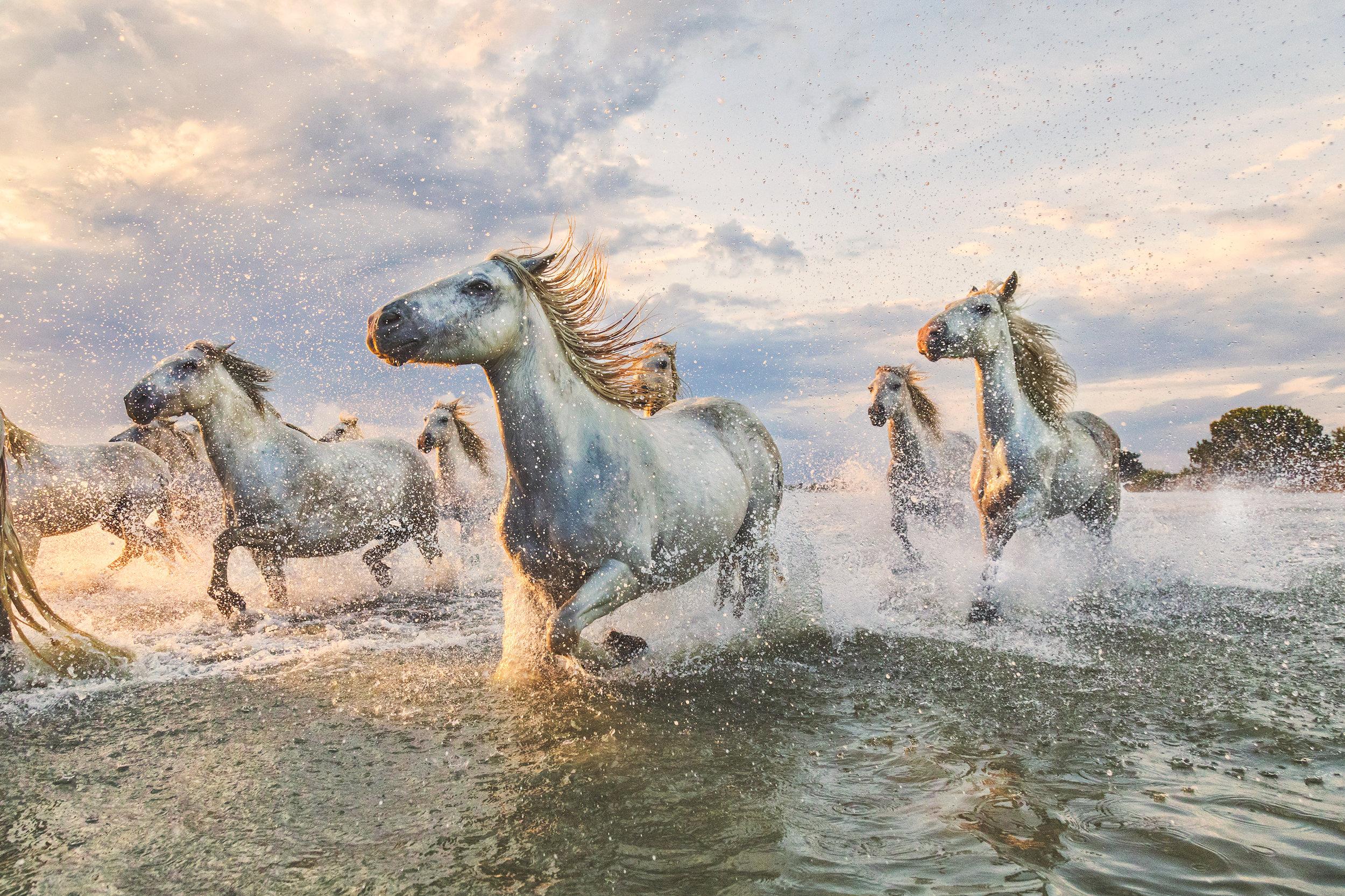 camargue_horses_france.jpg