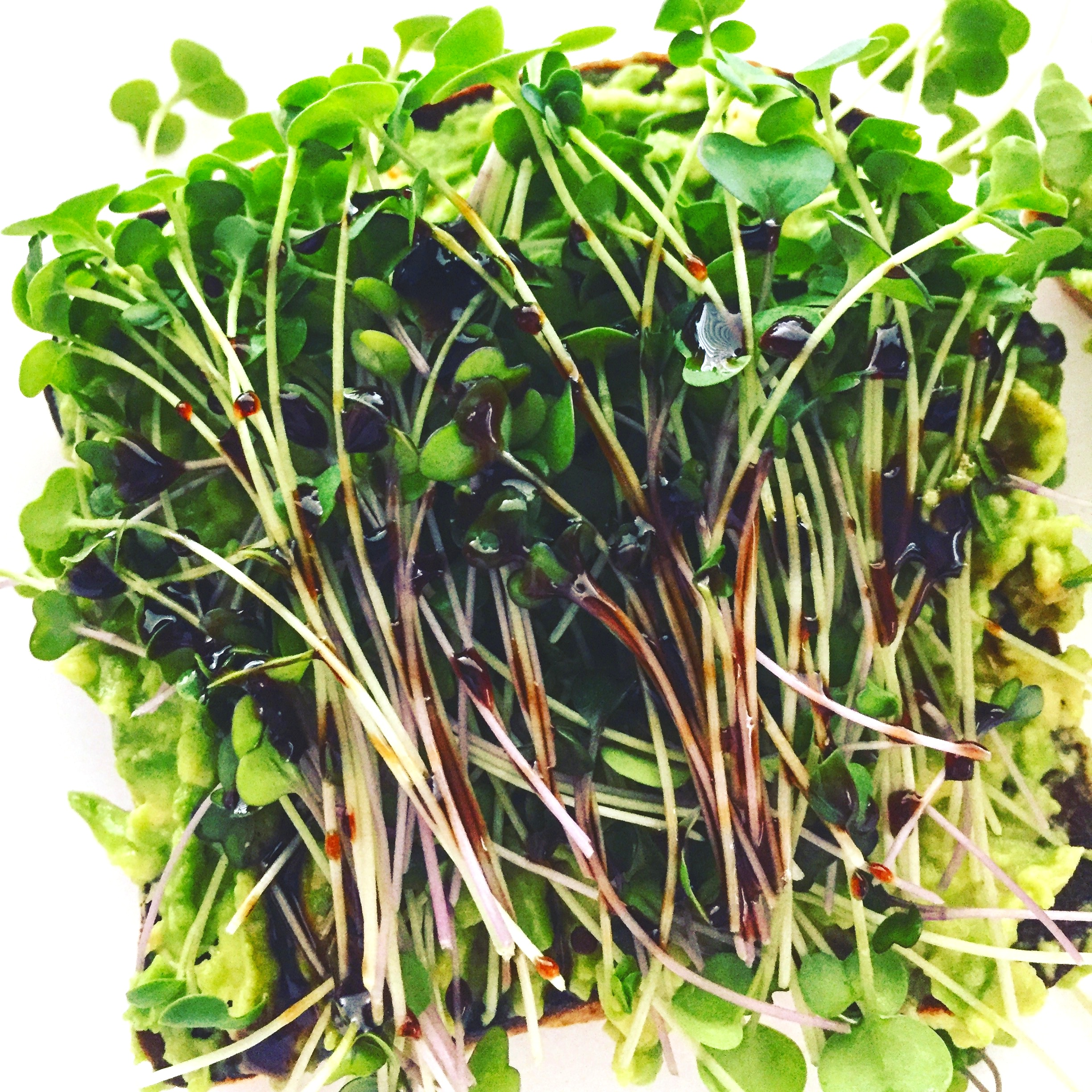 Take Action - Ready to join the microgreens revolution? Click below to be a subscriber!